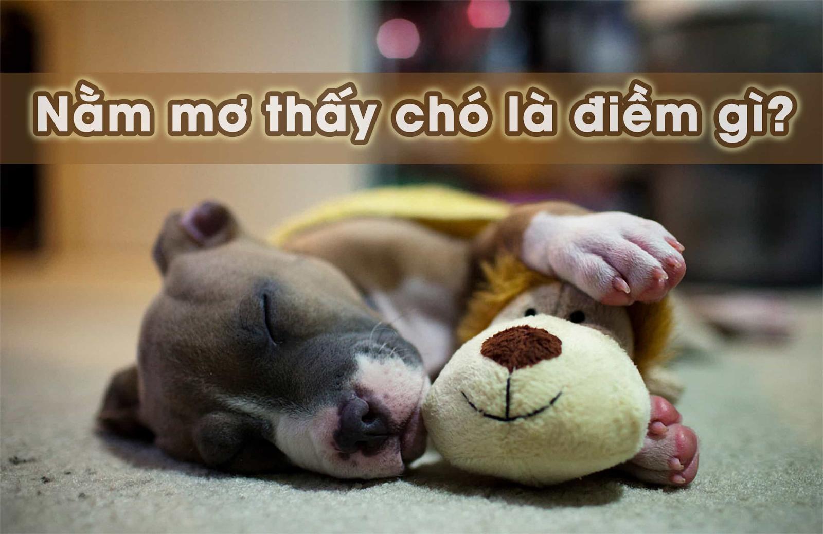 Nằm mơ thấy [2, 3, 4, 5] con chó ? Mơ thấy chó là điềm gì?